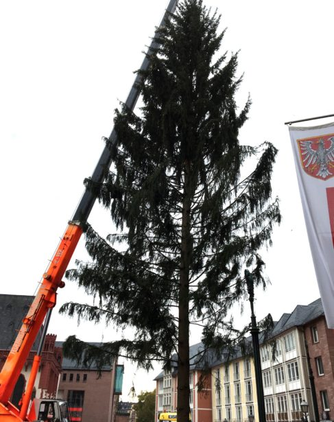 Weihnachtsbaum Frankfurt.Der Weihnachtsbaum Ist Da Das Frankfurter Stadtmagazin